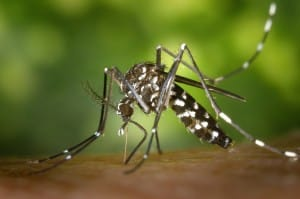 Protecting_Against_Zika_DermResearch